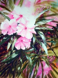 Oleanders 1