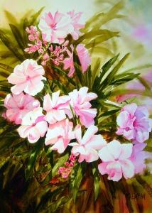 Oleanders 2