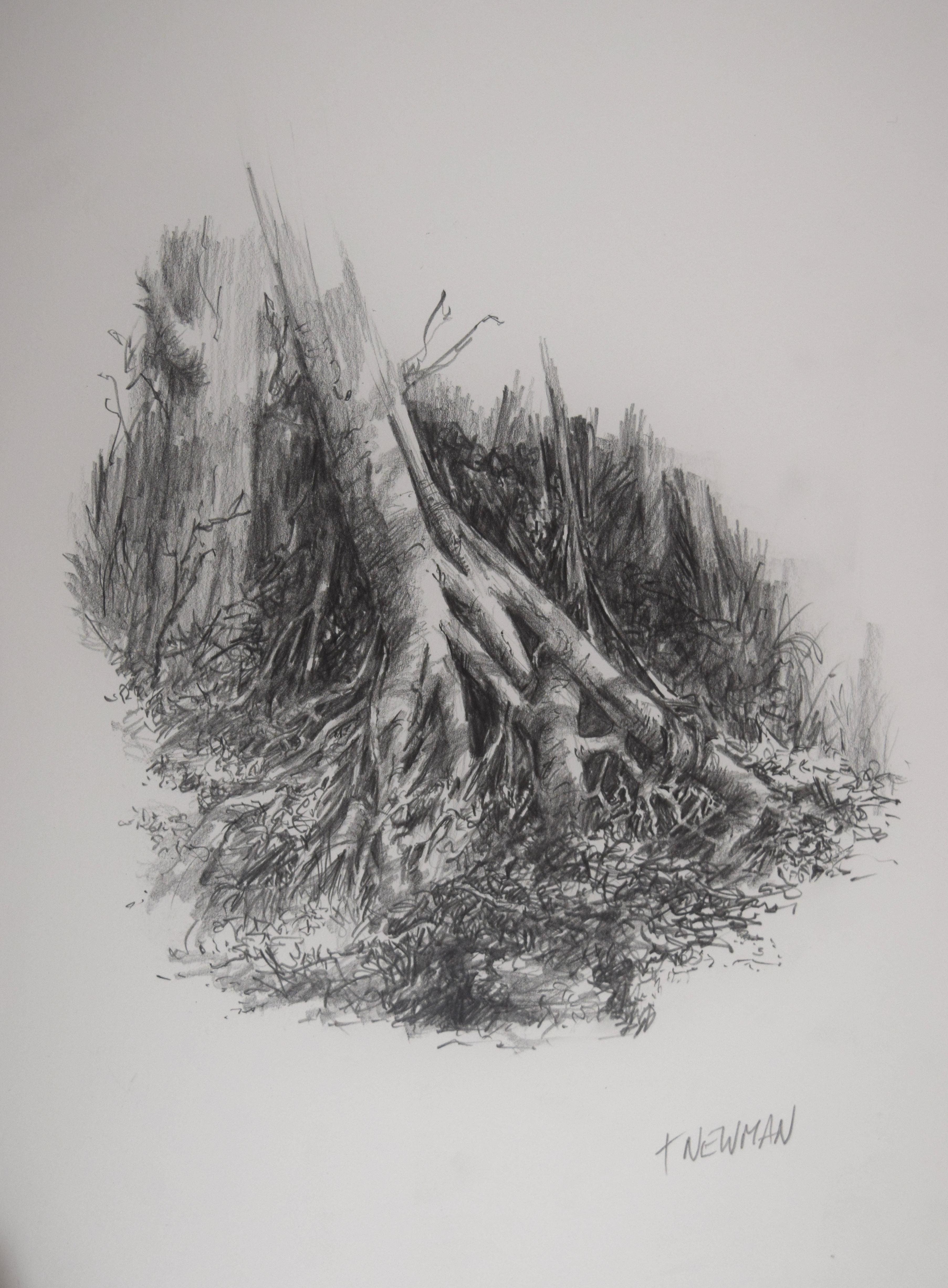 original drawings john newman