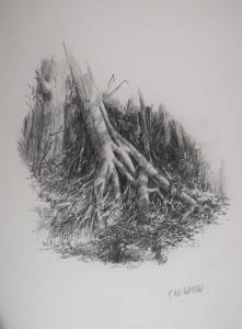 """Forest Floor"" 260 x 200 mm Graphite pencil (2B) on 260 gsm Bristol Board"